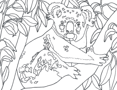 Colour in Zorro the wild koala